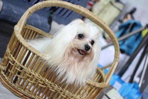 cute blonde dog