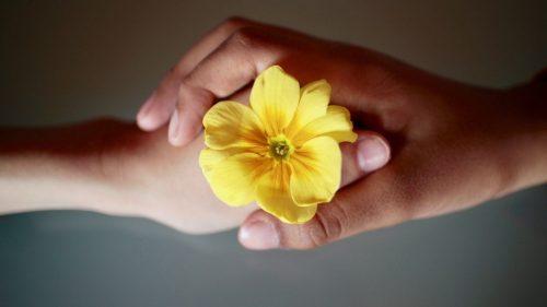 flower held between two hands